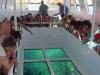 glass-boat-3-e-sharm