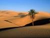 pustynia1