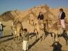 safari-sharm-el-sheikh-e-sharm-002