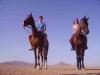 Safari wielbłądy i konie