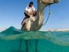 sharm-el-sheikh-camel