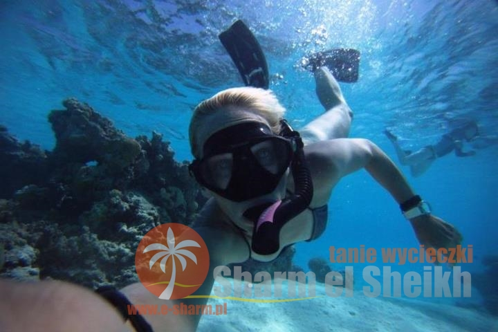 Nurkowanie Sharm el Sheikh