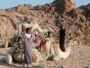 safari-sharm-el-sheikh-e-sharm-003