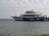 sharks-bay-port1