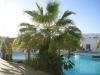 sharm-el-sheikh-ogrody-hotelowe