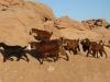 sharm-el-sheikh-osada-bediunska