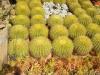 sklep-botaniczny-sharm-el-sheikh