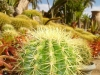 sloneczny-kaktus